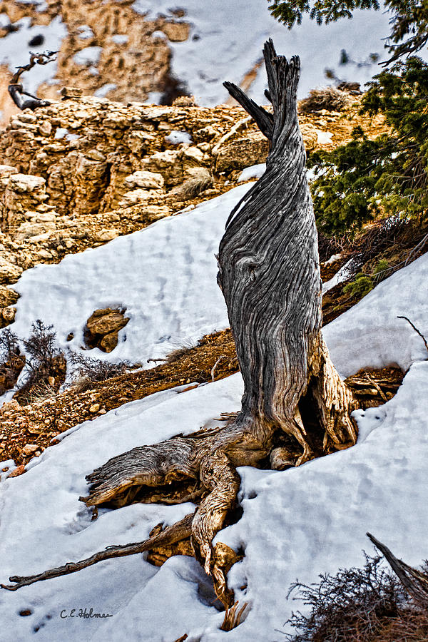 Tree Photograph - All That Remains by Christopher Holmes