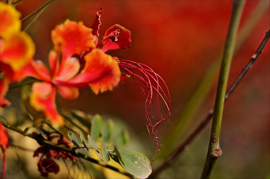 Flower Photograph - All That Way For This by Thorne Owenly