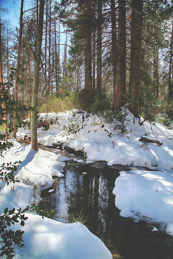 Snow Photograph - All That Weve Been Through by Laurie Search