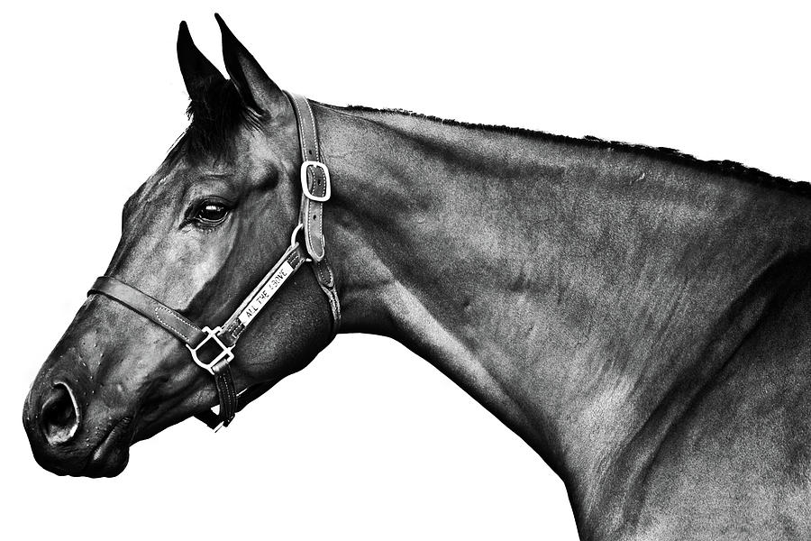 Horse Photograph - All The Above  by Charles Holloman