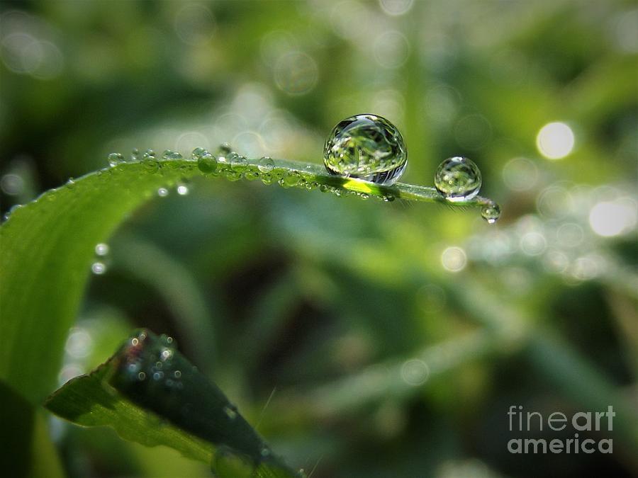 All The Pretty Drops Photograph