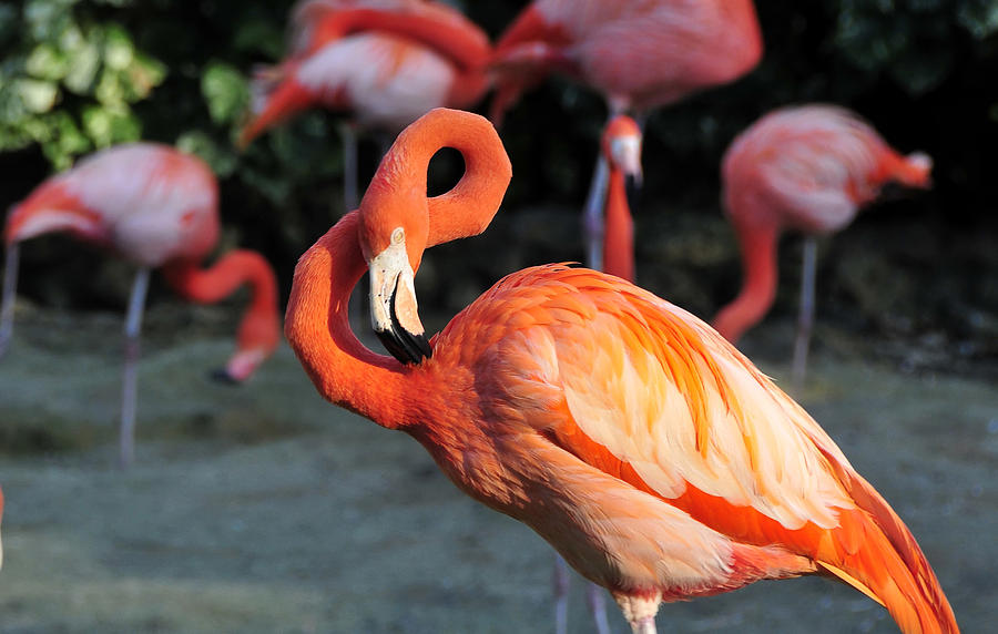 Flamingo Photograph - All Twisted Up by David Lee Thompson