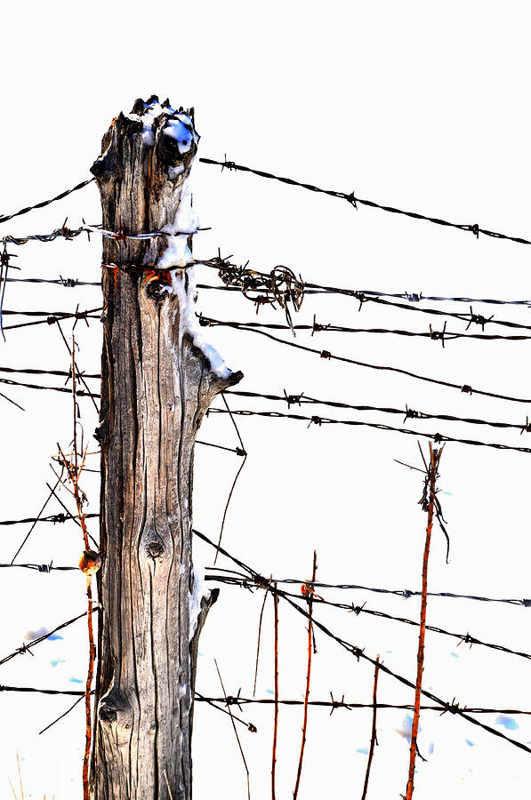 Barbed Wire Photograph - All Wired by Emily Stauring