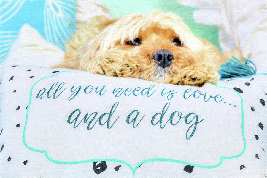 All You Need Is Love Photograph - All You Need Is Love And A Dog by JC Findley