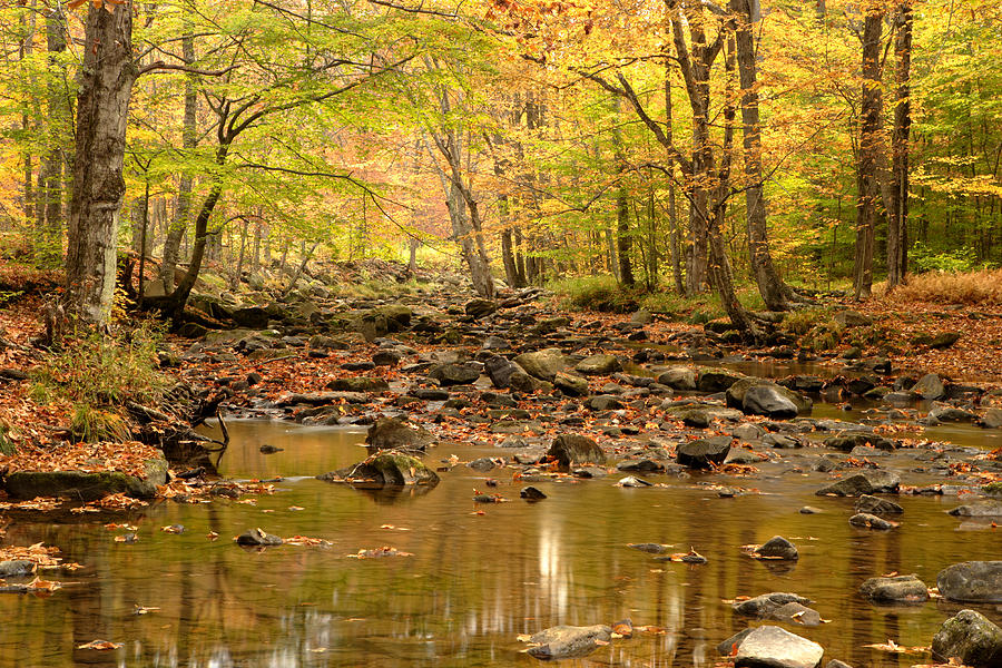 New York Photograph - Allegheny Fall by Eric Foltz