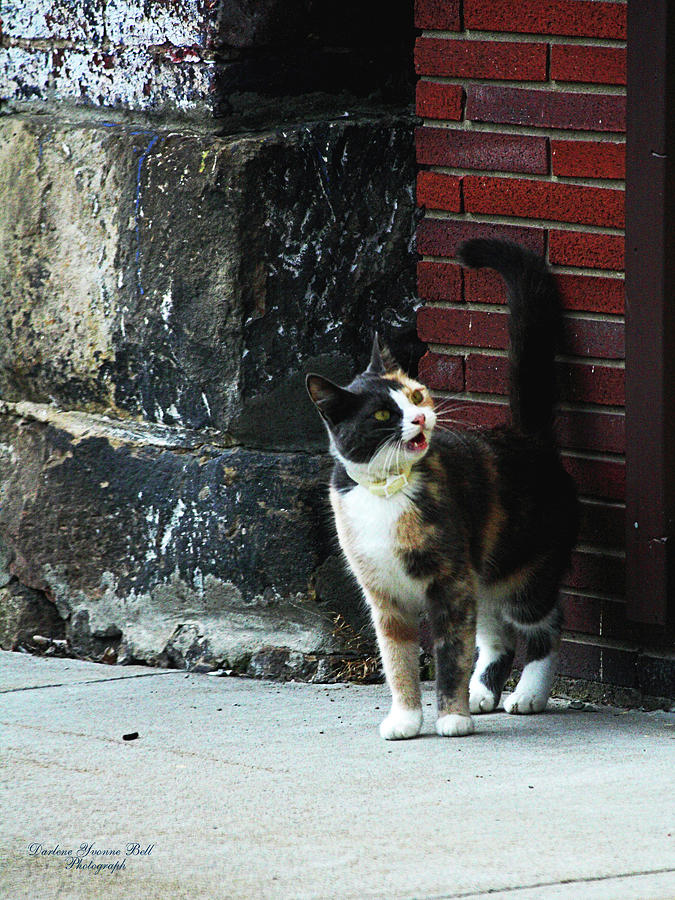 Cat Photograph - Alley Cat by Darlene Bell