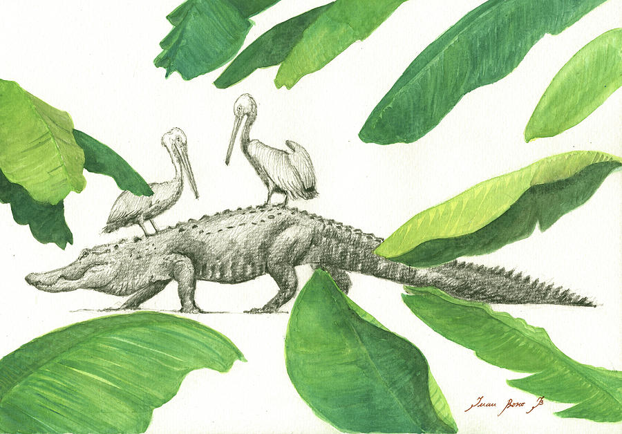 Florida Alligator Painting - Alligator With Pelicans by Juan Bosco