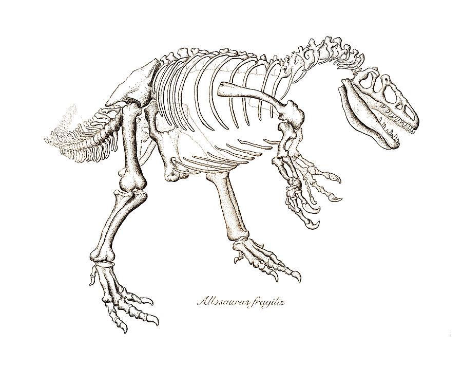 Allosaurus Drawing - Allosaurus Skeleton by Karla Beatty