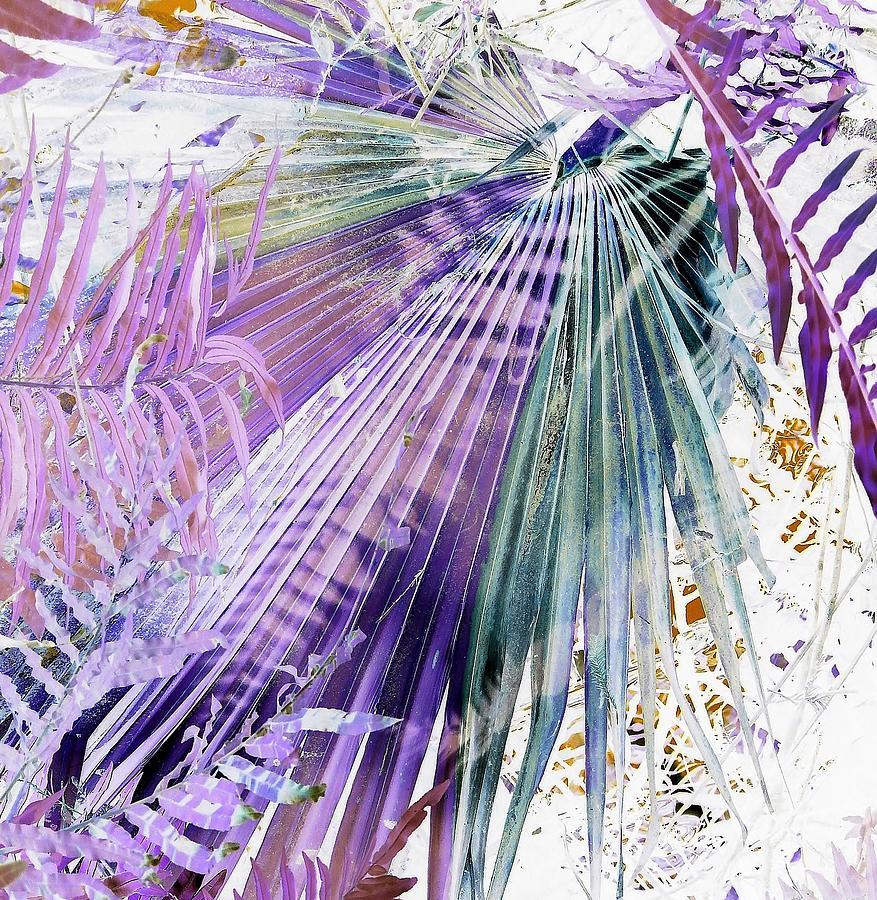Allure by John Hintz