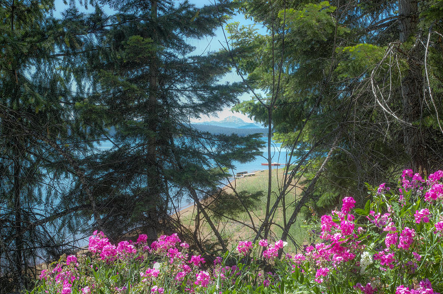 Almanor Lassen Flowers by Peter Dyke