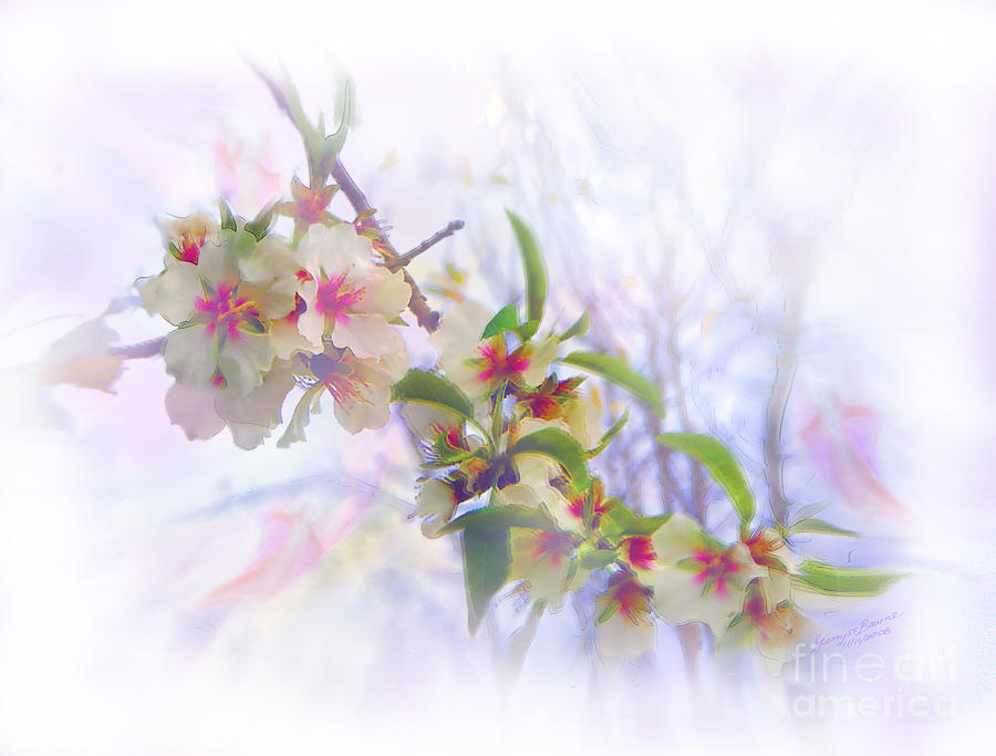 Blossoms Painting - Almond Blossoms by Glenyss Bourne