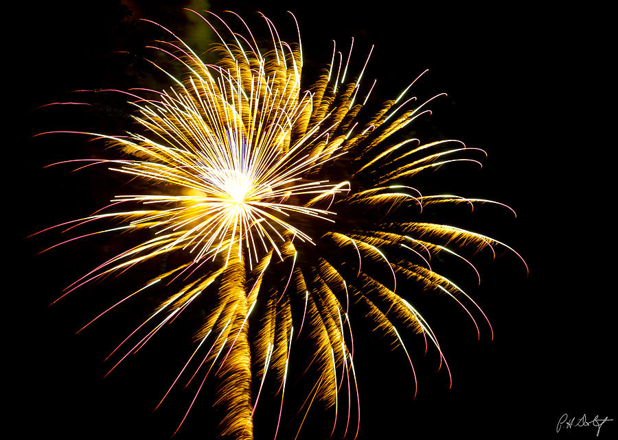 July 4th Photograph - Almost A Tree by Phill Doherty