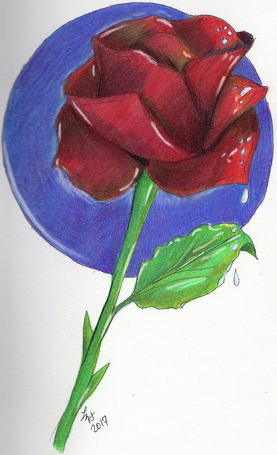Rose Drawing - Almost Black Rose by Loretta Nash