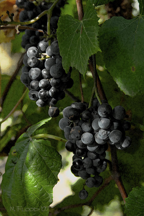 Grapes Photograph - Almost Harvest Time by Michael Flood