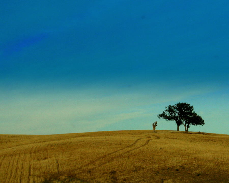 Tree Photograph - Almost Home by Kerry Reed