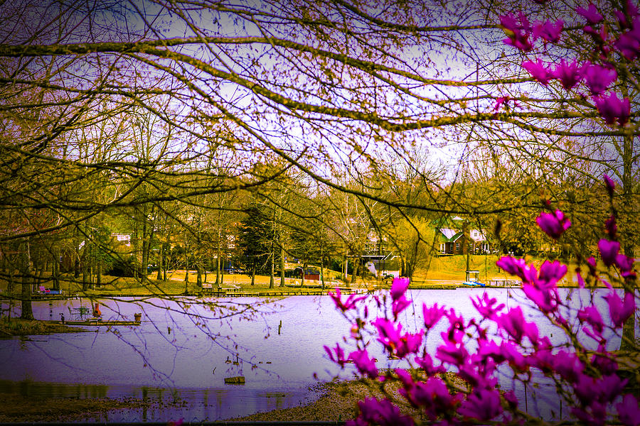 Spring Photograph - Almost Spring - Landscape by Barry Jones