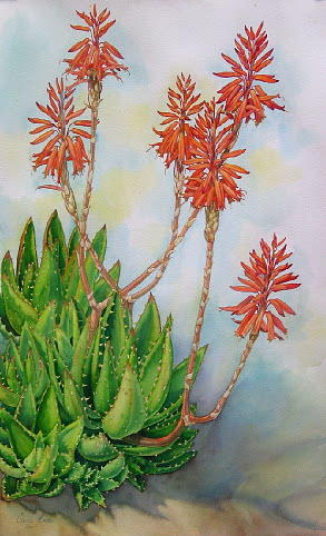 Flowers Painting - Aloe Nobiles by Elena Roche