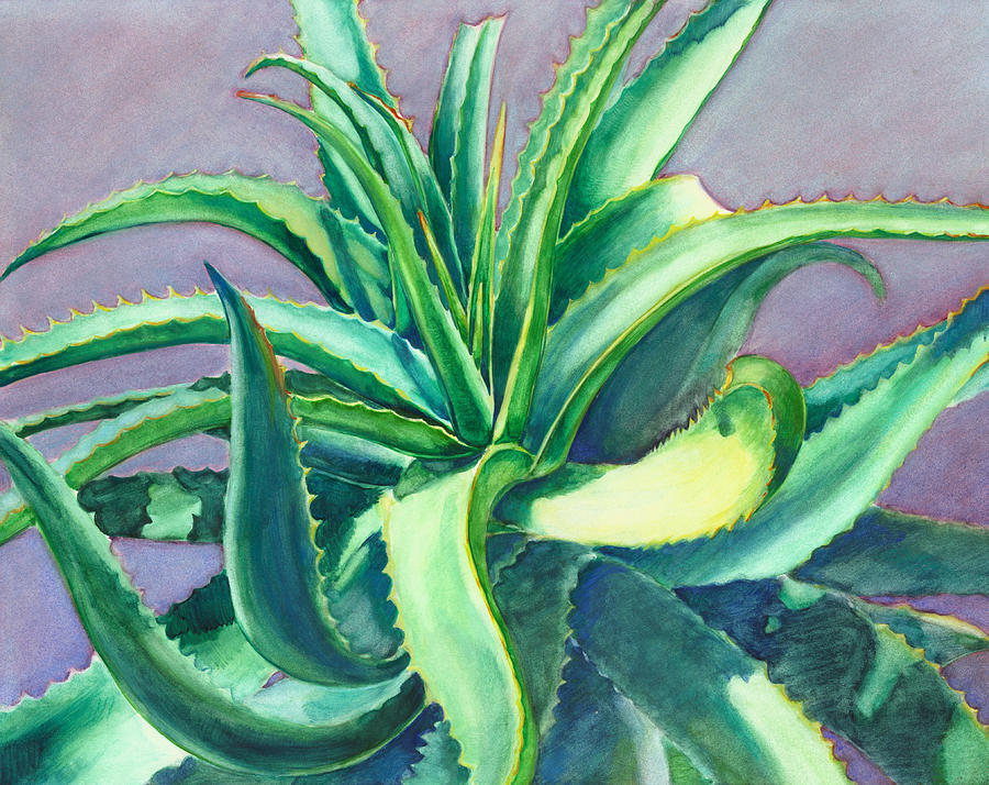 Aloe Vera Watercolor by Linda Ruiz-Lozito