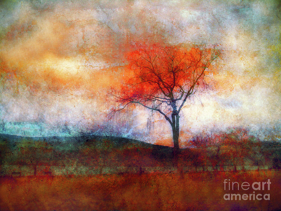 Tree Photograph - Alone In Colour by Tara Turner