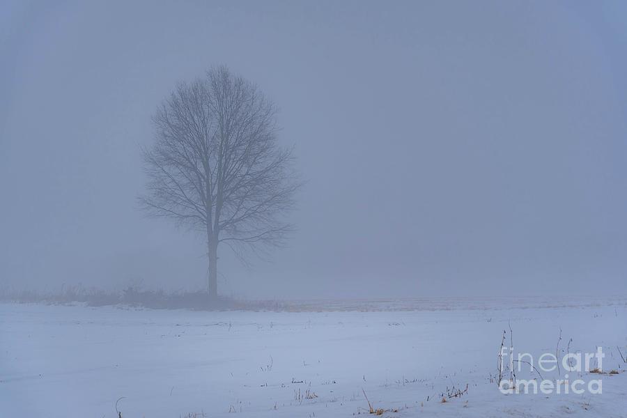 Alone In The Mist Photograph by Darren Walker