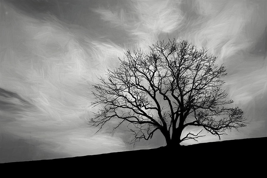 Alone Photograph - Alone On A Hill In Black And White by Tom Mc Nemar