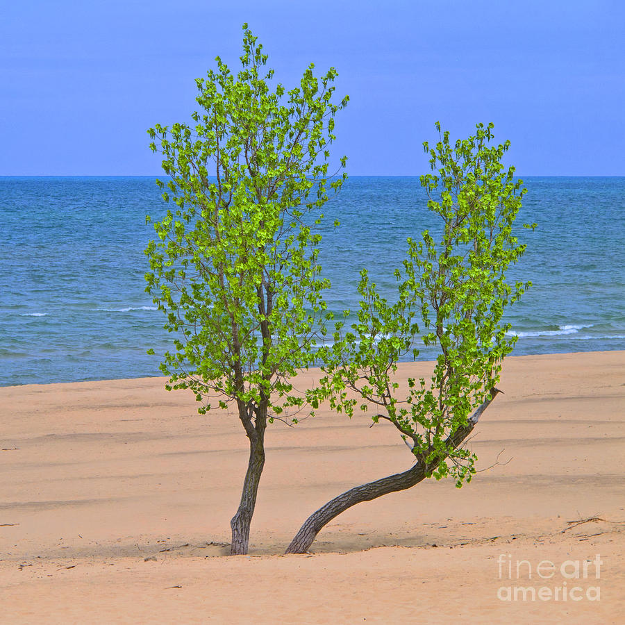 Alone On The Beach Photograph