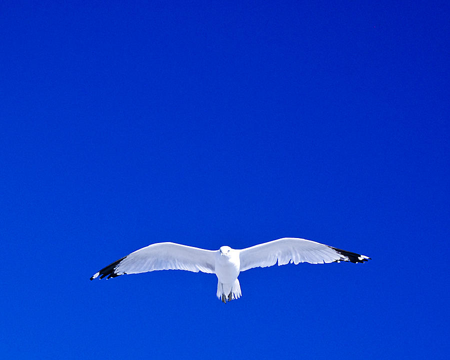 Gull Photograph - Alone by William Bray