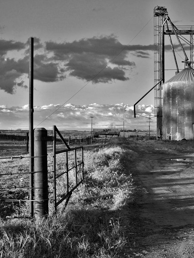 Along A Country Road In B And W Photograph