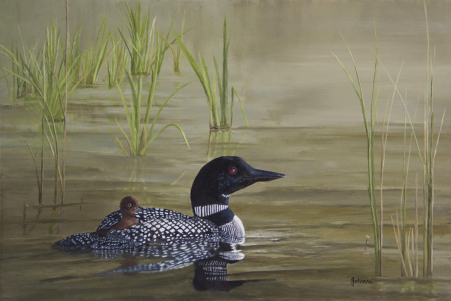 Along For The Ride - Loon With Baby by Johanna Lerwick