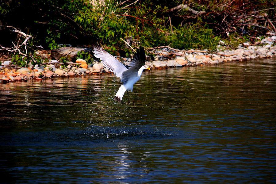 Bird Photograph - Along The Shoreline by Amanda Struz