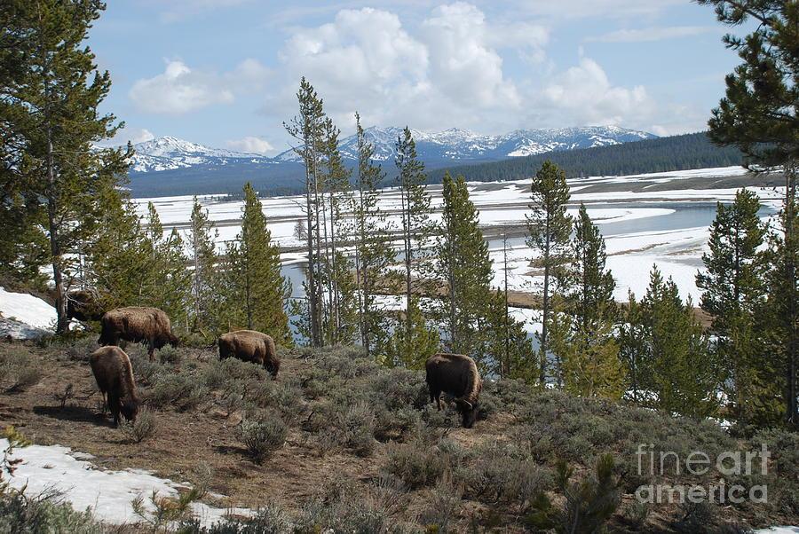 along the Yellowstone river by Jim Goodman