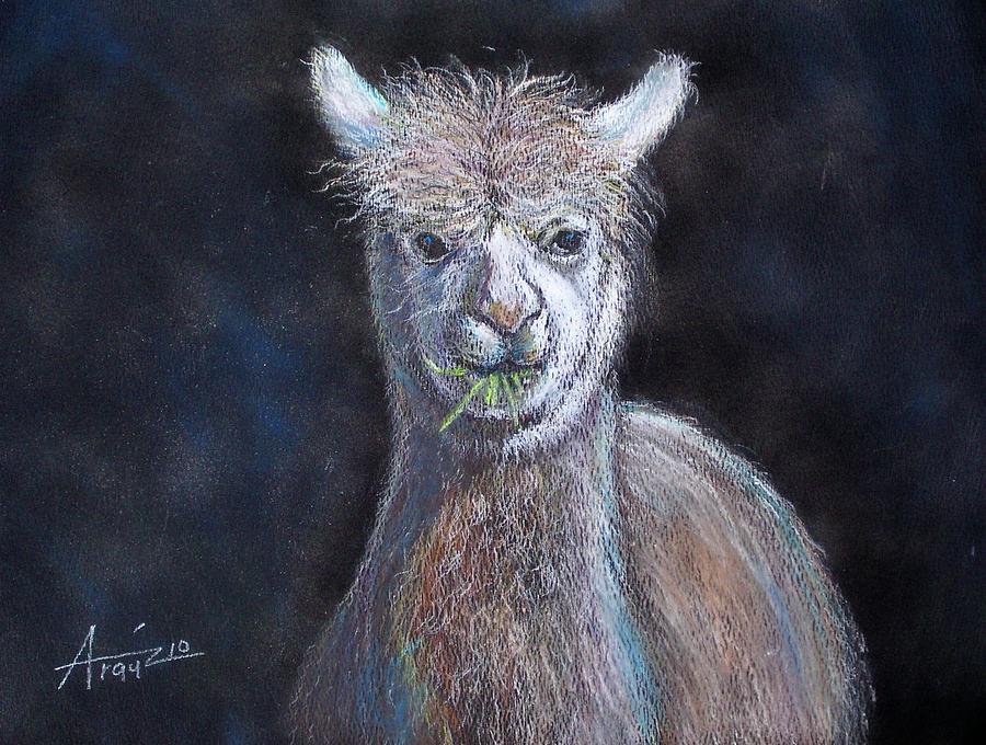 Alpaca Drawing by Oscar Arauz