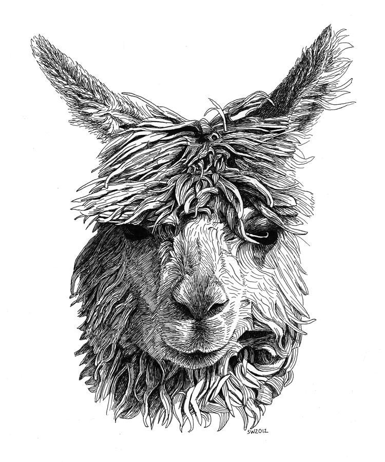 Alpaca Drawing by Scott Woyak