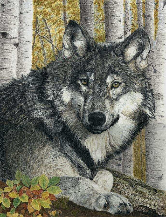 Wolf Painting - Alpha Male by Marlene Piccolin