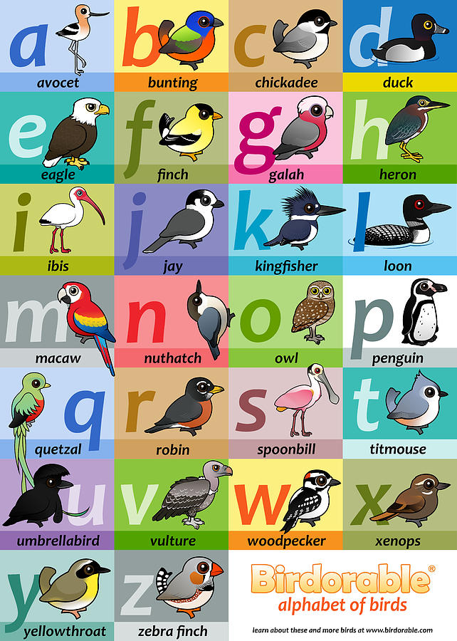 Birds Digital Art - Alphabet Of Birds By Birdorable by Arthur De Wolf