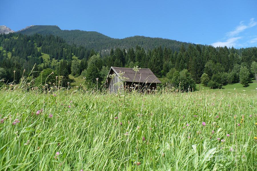 Alpine Photograph - Alpine Meadow  by Carol Groenen