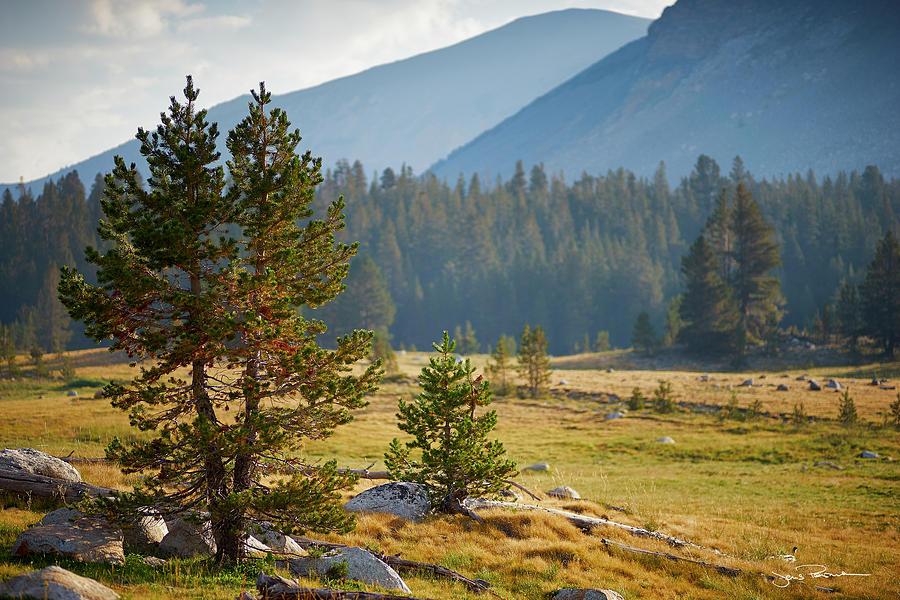 California Photograph - Alpine Meadow by Jens Peermann