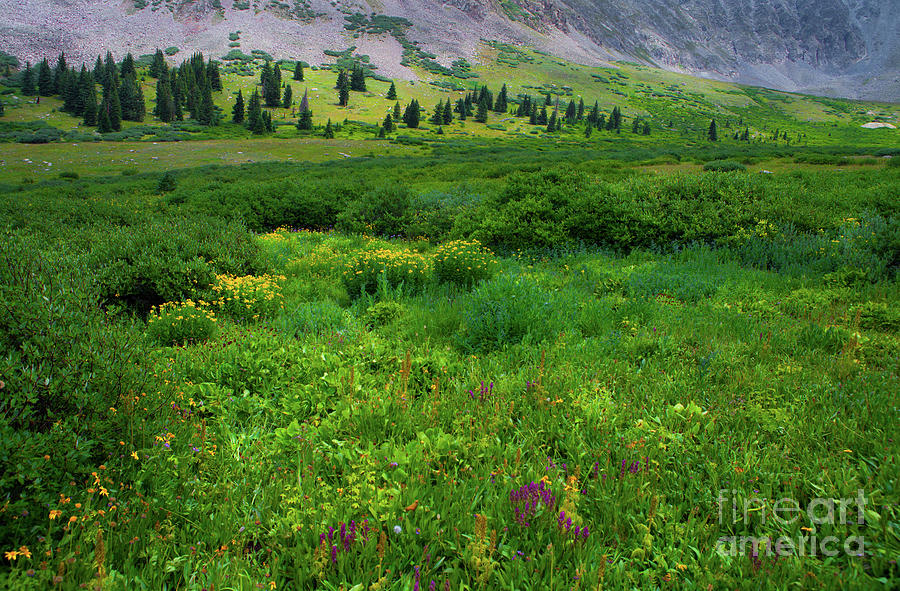 Alpine Wildflowers by Barbara Schultheis