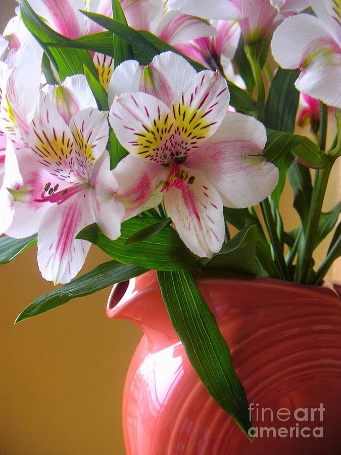 Nature Photograph - Alstroemeria Fiesta by Lucyna A M Green