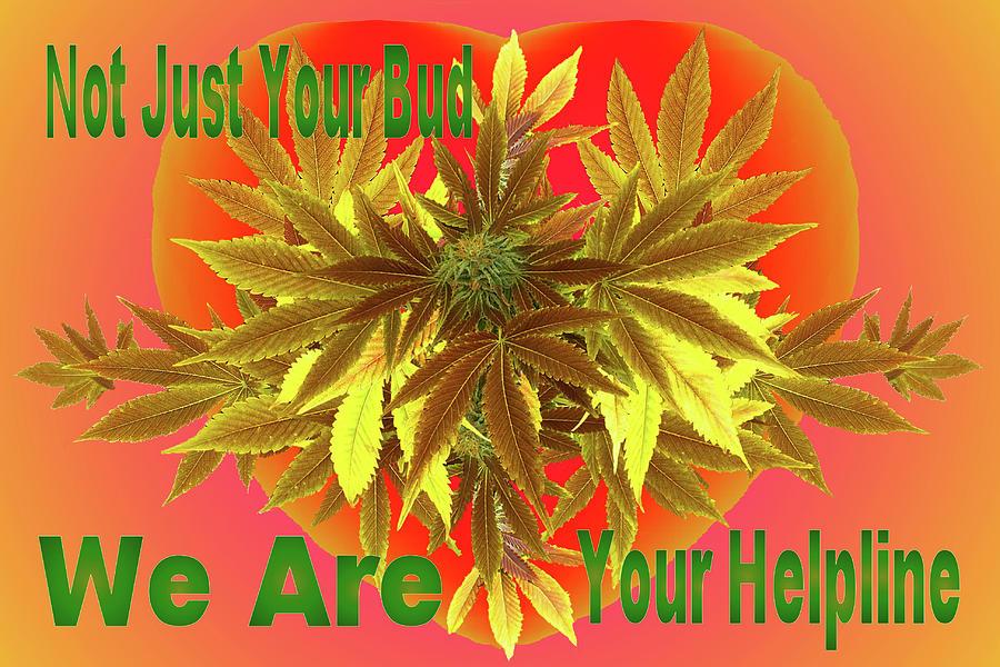 Alternative Medicine Mixed Media