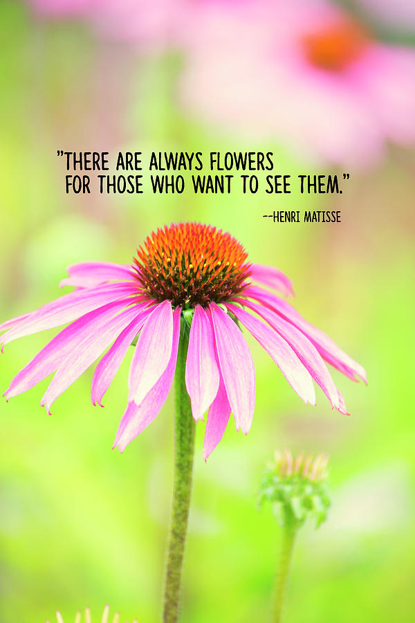 Flowers Photograph - Always Flowers by Bonnie Bruno