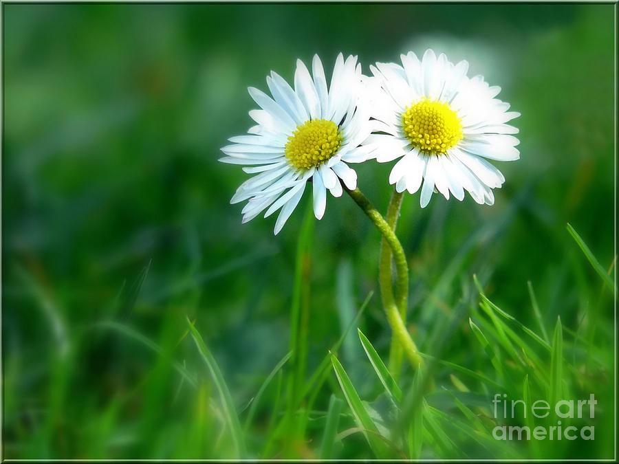 Flowers Photograph - Always by Jacky Gerritsen