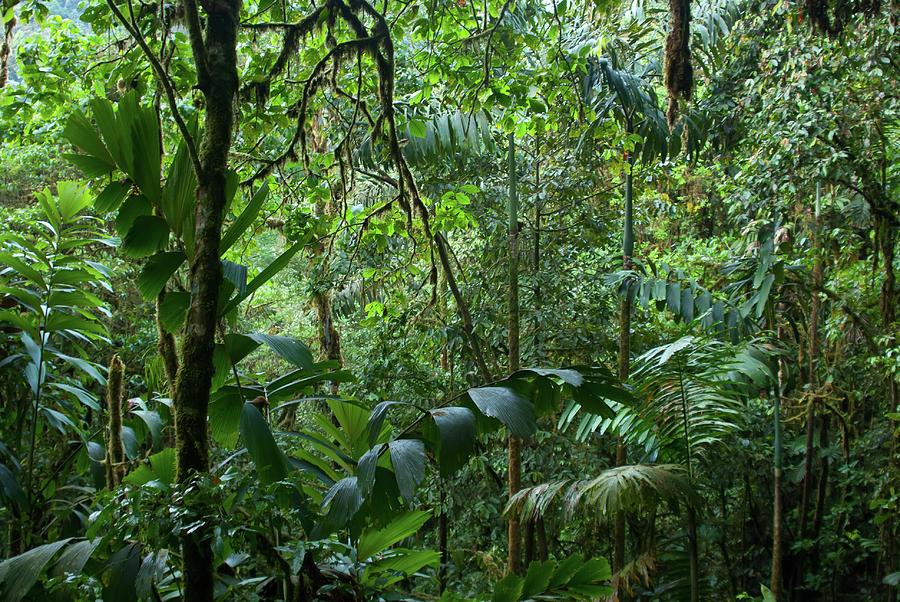Amagusa Forest Photograph