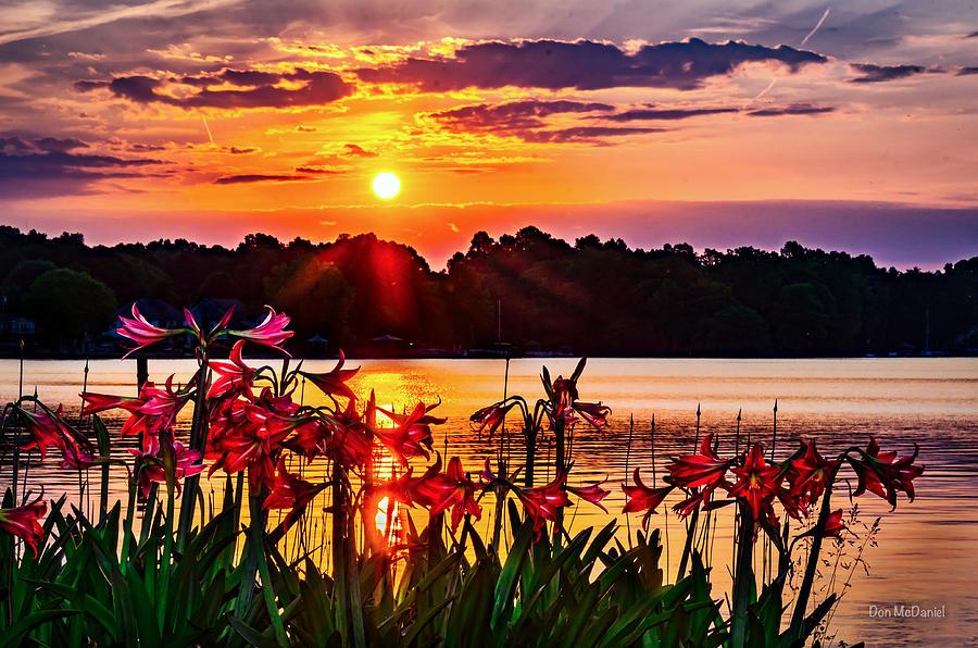 Amarylis Photograph - Amaryllis At Sunrise Over Lake by Don McDaniel