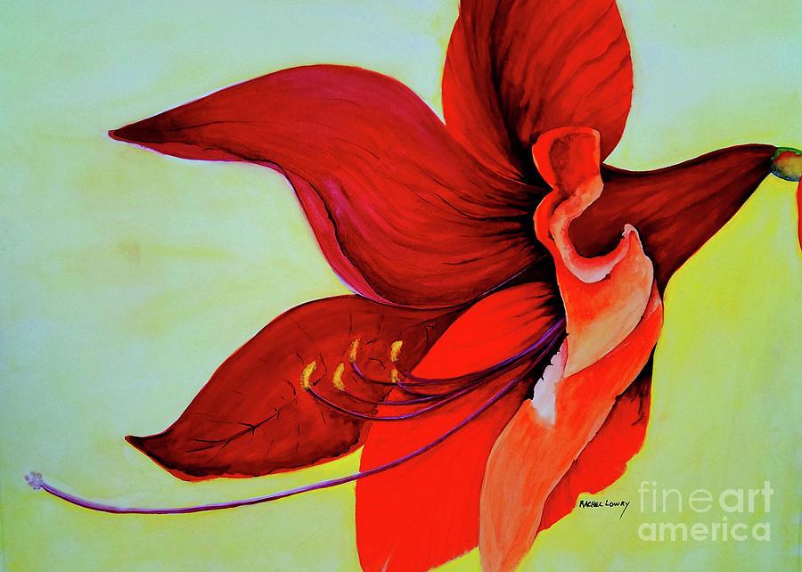 Amaryllis Blossom by Rachel Lowry