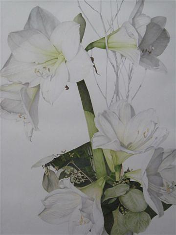 Amaryllis Drawing by Henny Adank