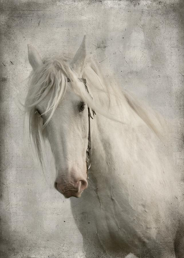 Horse Photograph - Amazing Grace by Dorota Kudyba