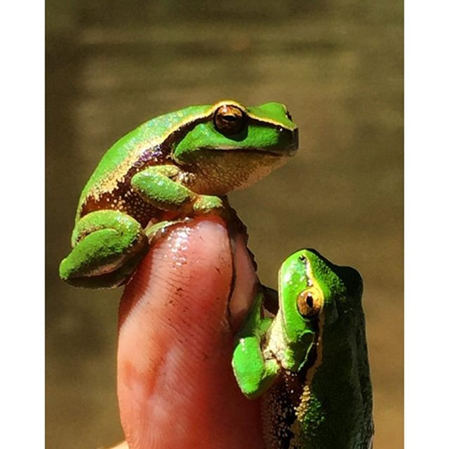 Frogs Photograph - Amazing Green Frogs Aberfeldy River by Paul Dal Sasso