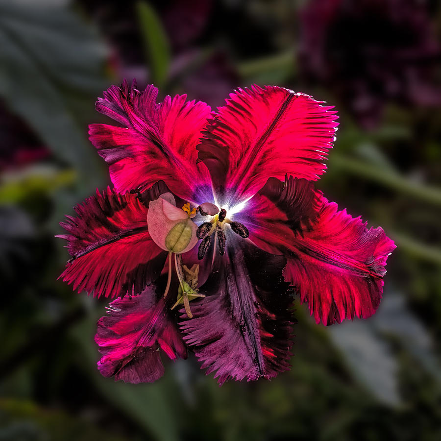 Amazing Red Flower Macro Photograph