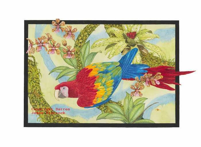 Scarlet Macaw Painting - Amazon by Darren James Sturrock